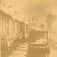 sale Museo Indiano Missionario Bologna